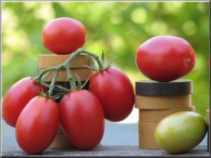 Pomodorino di Corbara Corbarino - iConfronti